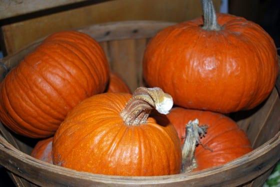 Liberty Pumpkins