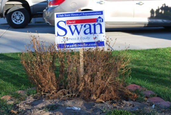 Swan Election Sign