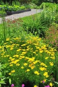 Yellow flowers in Bartrams Garden
