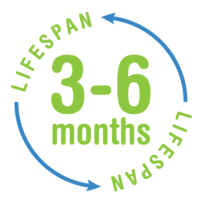 Lifespan 3 to 6 months